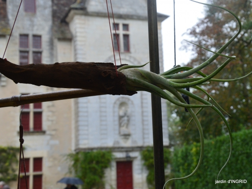 Neuvic,jardin,champignons canal 160-001.JPG