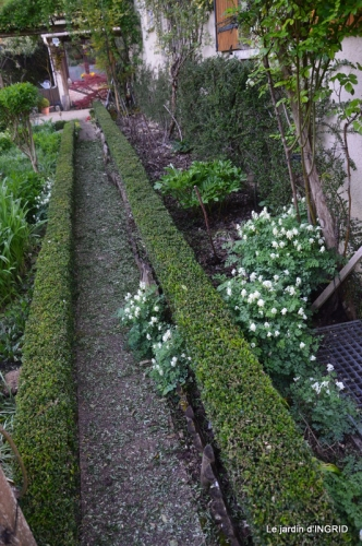 geais,jardin,printemps 087.JPG