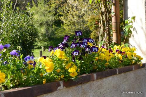tillandsia,rainette,terreau,jardin 081.JPG