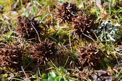 jardin ,semis,marron 028.JPG