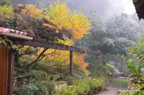 brouillard le matin d'automne 024.JPG