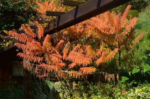 Jardin à l'automne 052.jpg