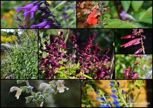 2016-09-28 tour de jardin,bouquet,chez Bernadette,.jpg