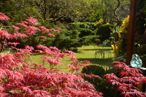 jardin avril et mai, 103.JPG