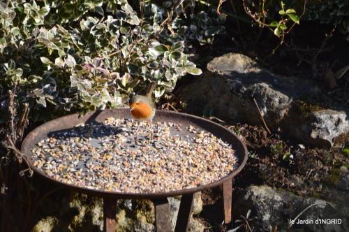 pour les oiseaux,roseraie,enveloppes SOL 060.JPG