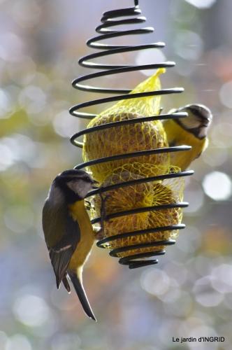 enveloppes,oiseaux,jardin,héllébores 121.JPG