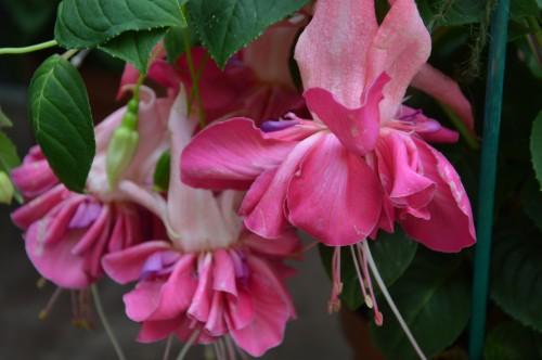 CADOUIN,cascade,iris,roses,fl.sauvages 052.JPG