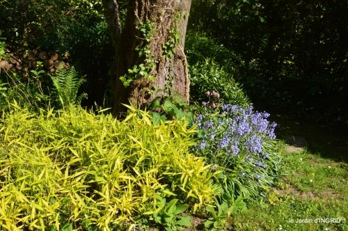 rosier de banks,jardin,cygnes,osier 084.JPG
