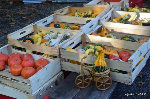 Issigeac,citrouilles ,rhus,automne,jardin 020.JPG