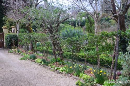 jonquilles,fête de l'arbre,jardinage,bouquet 099.JPG