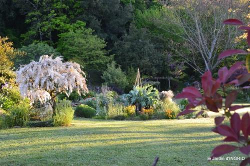 jardin,bébés cygnes,puces Prigorieux,pavot 037.JPG