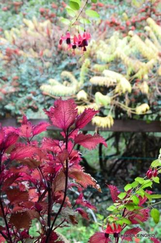 citrouille fleurie,décos jardin,automne 037.JPG
