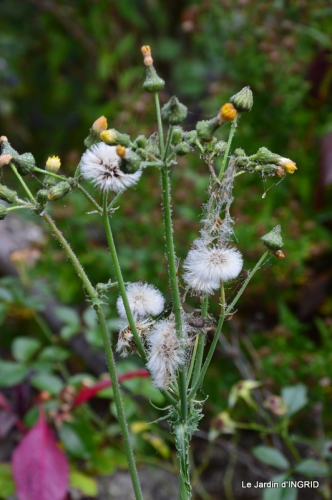 brume,dentelles,fleurs,Noel Jardiland 036-001.JPG