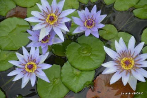 orage,puces,bouquet,Anniv.Ines,Brantome,Jardins d'eau 334.JPG