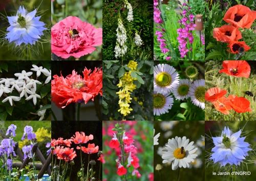 2016-05-01 coquelicots,fête des fleurs Lalinde,fouleix,jardinage4.jpg
