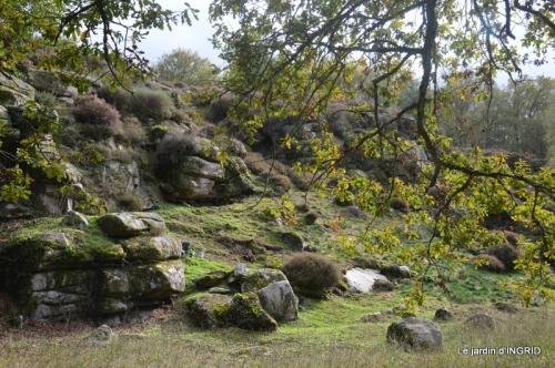 la Sedelle,étang de Riault,cyclamens 071.jpg