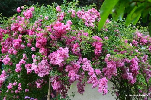 potager,chenille,pour le 18 juin,tour du jardin 084.JPG