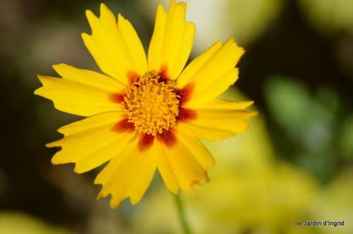 coeur des fleurs,papillons,libellules 153.JPG