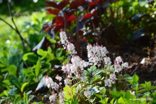 colline,orchidée,nature,jardin fleuri 041.JPG