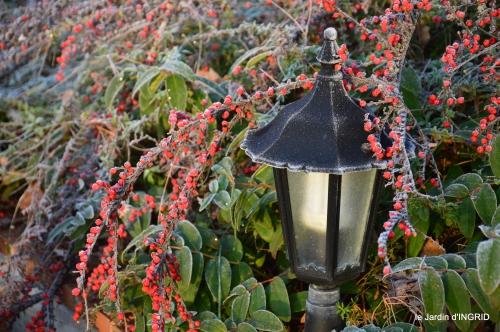 jardin givré,taille de prunus 018-001.JPG