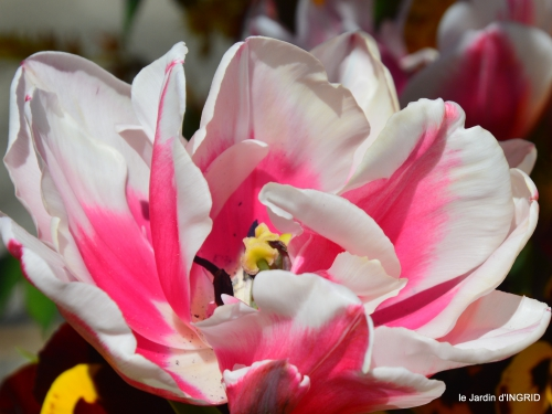 jardin printemps 063.JPG