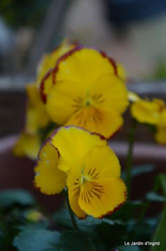 tour du jardin printemps 044.JPG