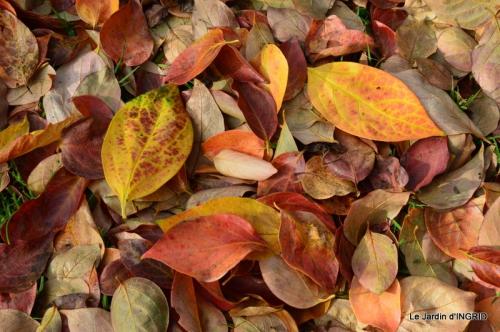 Romefort,bord de Creuse,vent,feuilles,jardin,canal 176.JPG