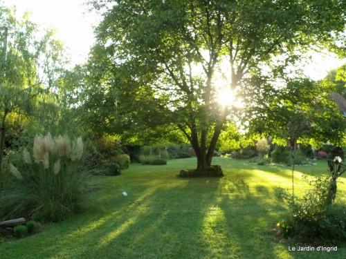 jardin 2010 2011 les plus belles 008.JPG