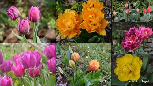 2014-03-28 jardin ,cane sauvage,paquerettes,tulipes4.jpg