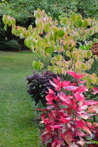 jardin en septembre,les cygnes 136.JPG