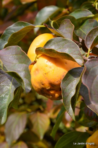 automne,arbres,inondation 109.JPG