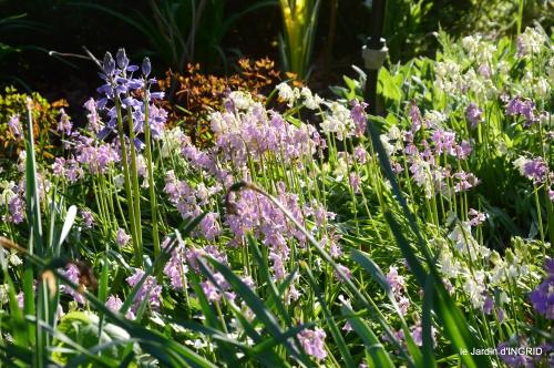colline,orchidée,nature,jardin fleuri 083.JPG