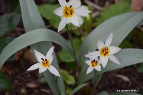 semis,taille,tonte,tour du jardin 022.JPG
