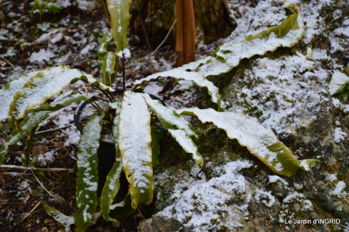 oiseaux première neige 022.JPG