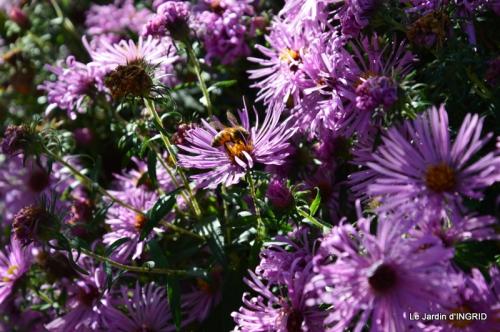 insectes,fleurs,land art,Couze,chateau de Banes,Lalinde,Monsac 219.JPG