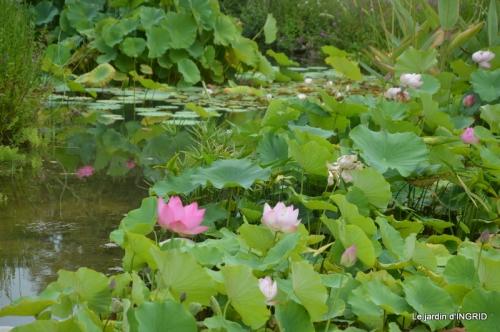 orage,puces,bouquet,Anniv.Ines,Brantome,Jardins d'eau 224.JPG