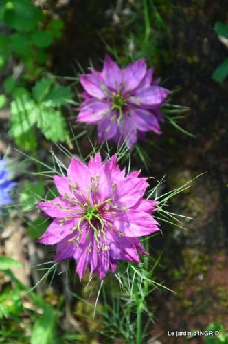 les roses,les 4 filles,jardin,Julie,coquelicots,cygnes 028.jpg