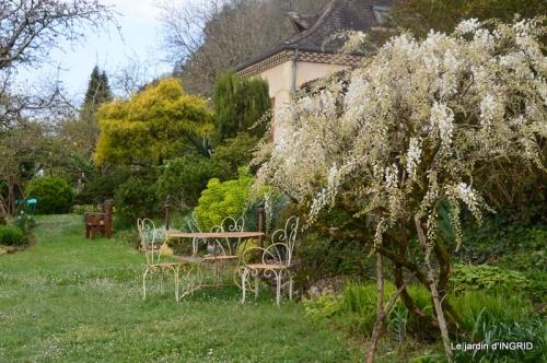 jardin confiné ,osier,magnolia jaune 038.JPG