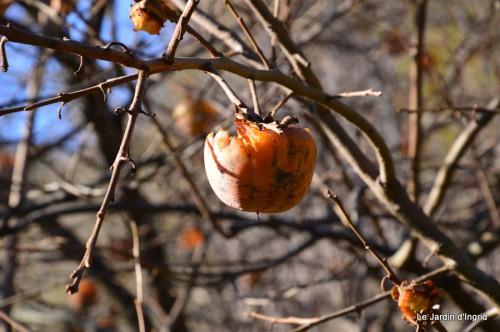 dernières automne,givre,chat 038.JPG