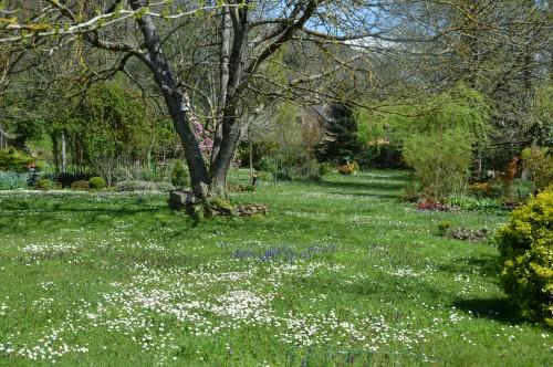 avant tonte,après,euphorbes,tulipes botaniques,autres 018.JPG