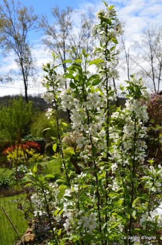 canards,pivoine,malus,abeilles,jardin 069.JPG