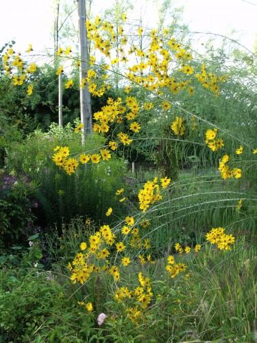 les Essards,concours terre neuve,jardin, 058.JPG