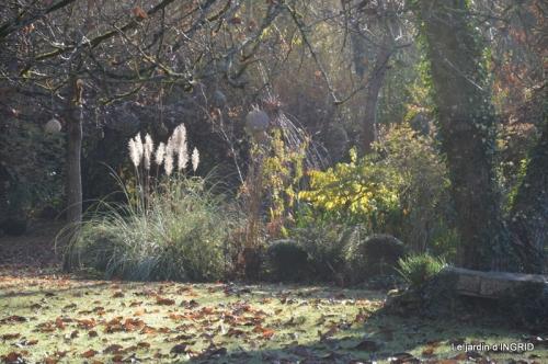 composition,kakis,jardin givré,asclépias,lalinde 030.JPG