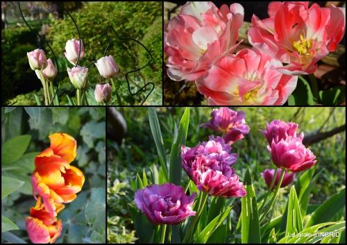 2017-05-06 Julie,Lalinde,Cygnes,Roses,Osier à Monbazillac.jpg