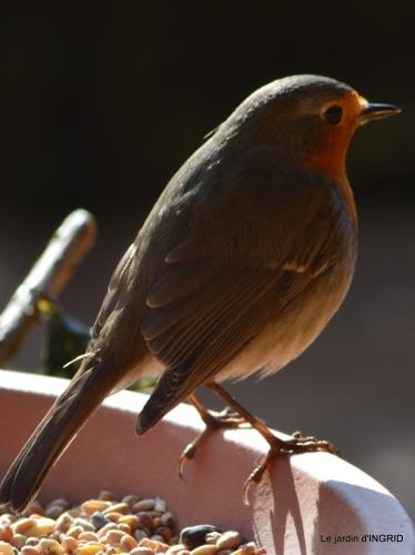 les lettres,les oiseaux,givre 053.JPG