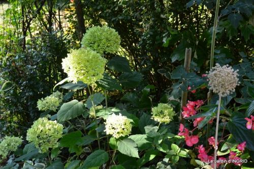 dahlias,jardin,puces st Avit Seigneur,Paniers Issigeac,Romane 068.JPG