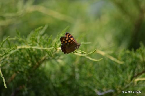 coeur des fleurs,papillons,libellules 123.JPG