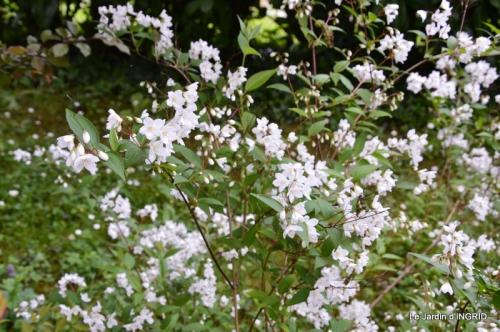 jardin avril 105.JPG