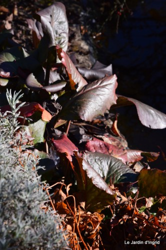 dernières automne,givre,chat 031.JPG