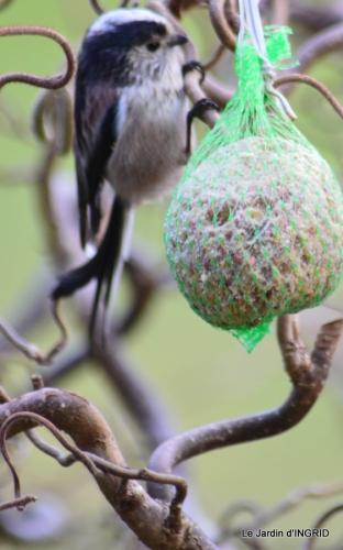 les oiseaux ,2 partie 072.JPG